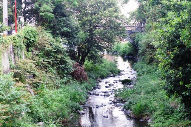 中島川桃渓橋から上流方向をのぞむ