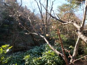 garden_img_688